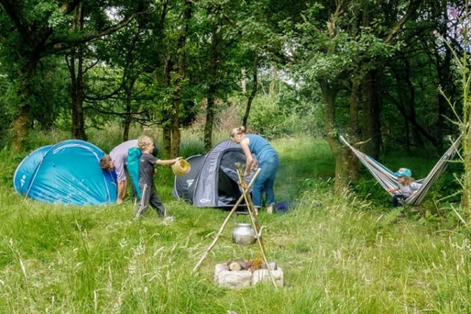Wild campers in 'Mystery Wood'