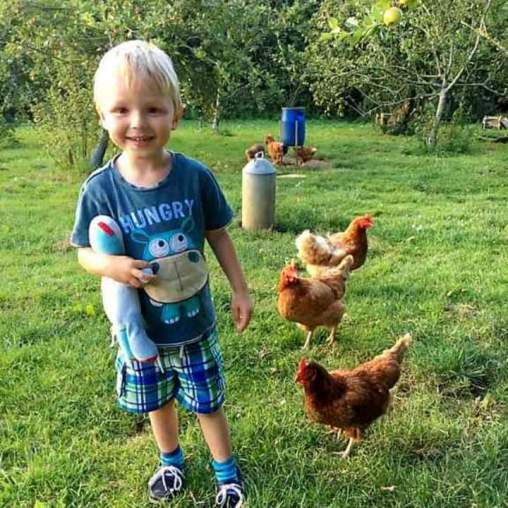 Our farm Hen's that lay your breakfast.